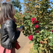 『京成バラ園』に行ってきました♪きれいなバラのお庭で、写真映え間違いナシ♡